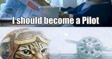 Best Decision Ever - Cat humor