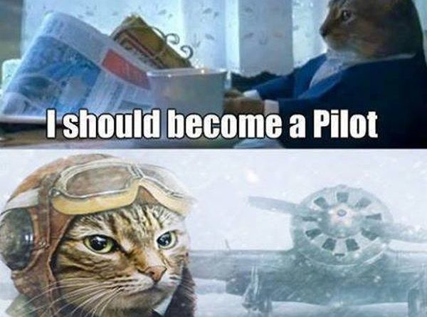 Best Decision Ever - Cat humor