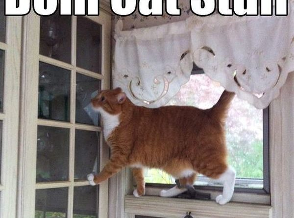 I'm Just A Cat - Cat humor