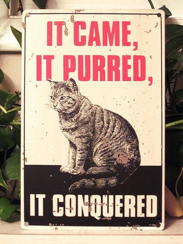 It Came, It Purred... - Cat humor