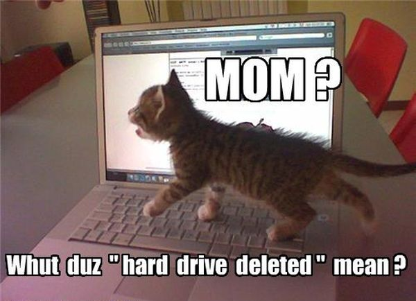 Mom? What Does This Mean? - Cat humor