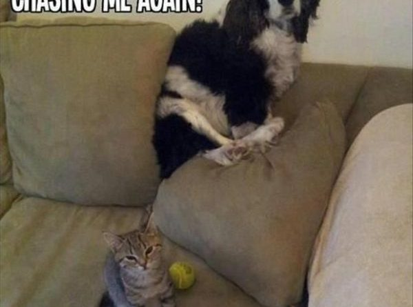 Mom, He Was Chasing Me - Cat humor