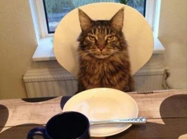My Dear Human - Cat humor