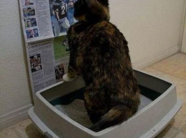 Meanwhile In The Litter Box - Cat humor
