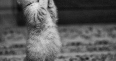 Please... - Cat humor