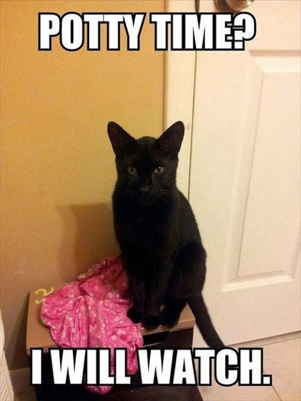 Potty Time - Cat humor