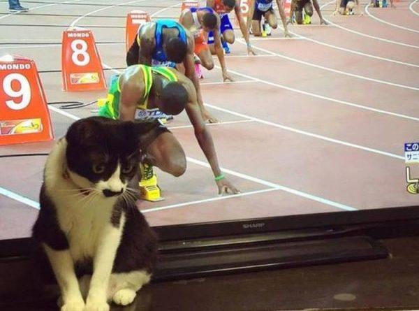 Ready Steady... - Cat humor