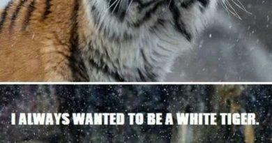 Hey! It's Snowing - Cat humor