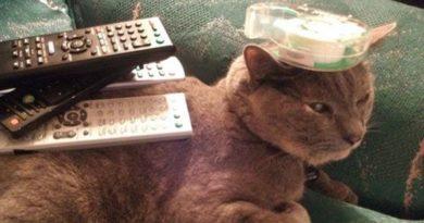 Stalemate - Cat humor