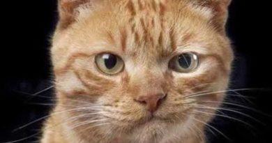 That Awkward Moment - Cat humor