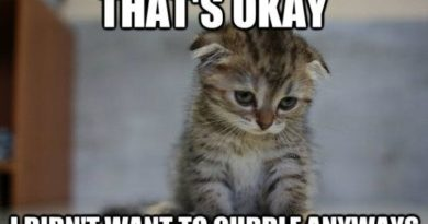 It's Okay... - Cat humor