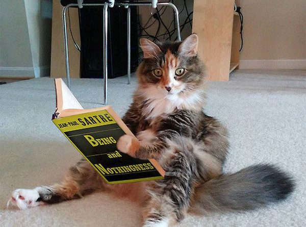 This Cat May Be Having An Existential Crisis - Cat humor