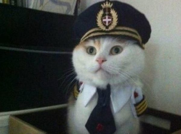 This Is Your Captain Speaking - Cat humor
