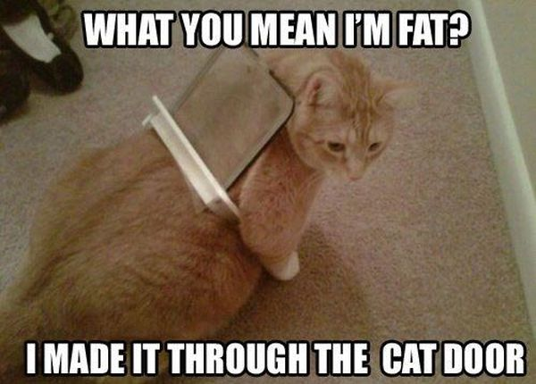 What Do You Mean I'm Fat? - Cat humor