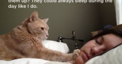 Why Do The Humans Get Mad When I Wake Them Up? - Cat humor