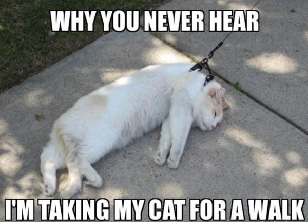Why You Never Hear... - Cat humor