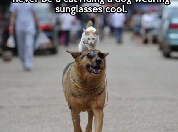 You Might Think You're Cool - Cat humor
