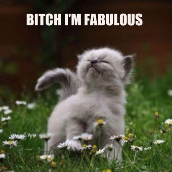 Bitch I'm Fabulous - Cat humor