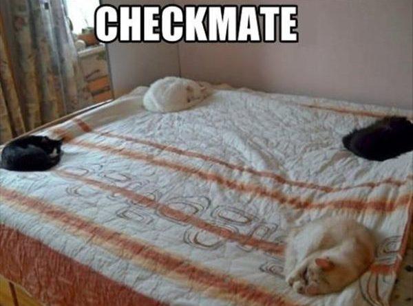 Checkmate - Cat humor