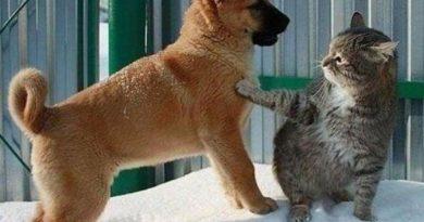 Dog, Just Let Her Go! - Cat humor