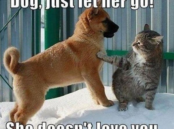 Dog, Just Let Her Go! - Cat humor