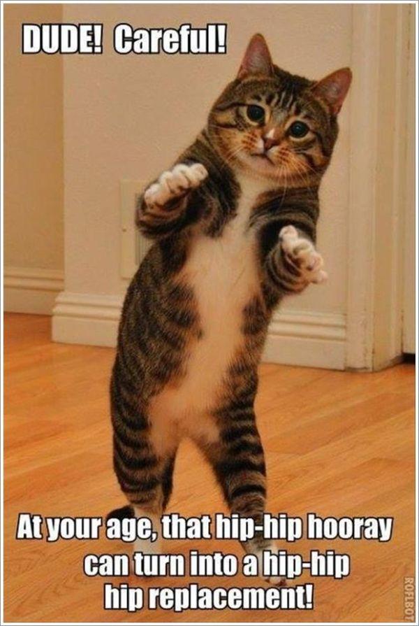 Dude! Careful! - Cat humor