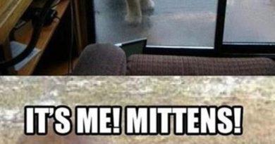 Dude! Let Me In - Cat humor