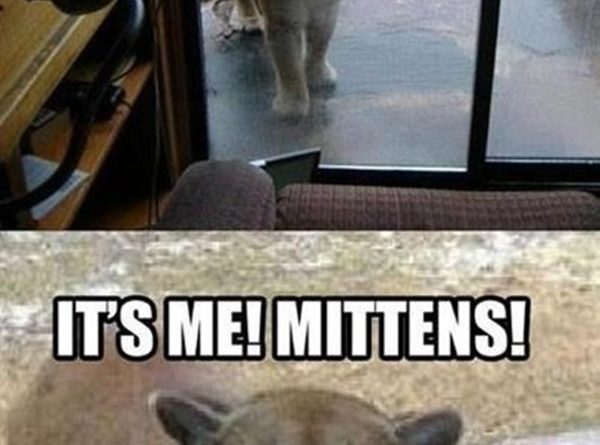 Dude! Let Me In - Cat humor