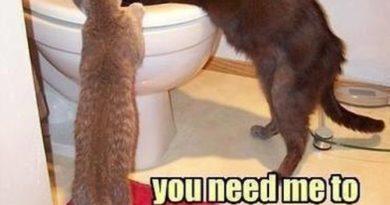 Dude... - Cat humor