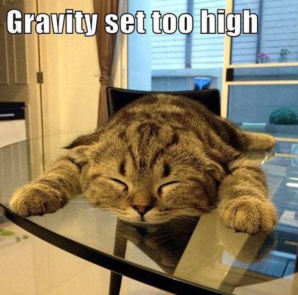 Gravity Set To High - Cat humor