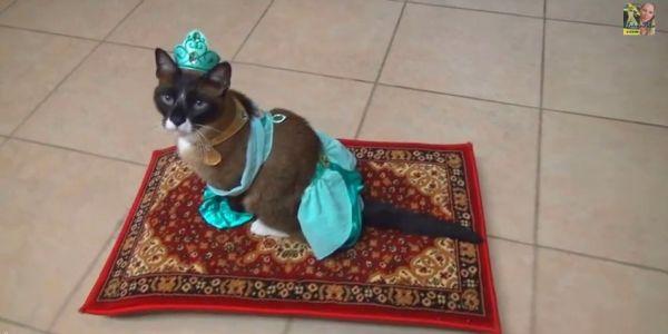 Halloween cat costume - cat humor
