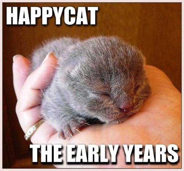 Happy Cat - Cat humor