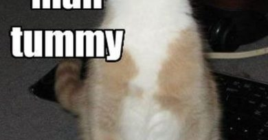 Happy Tummy - Cat humor