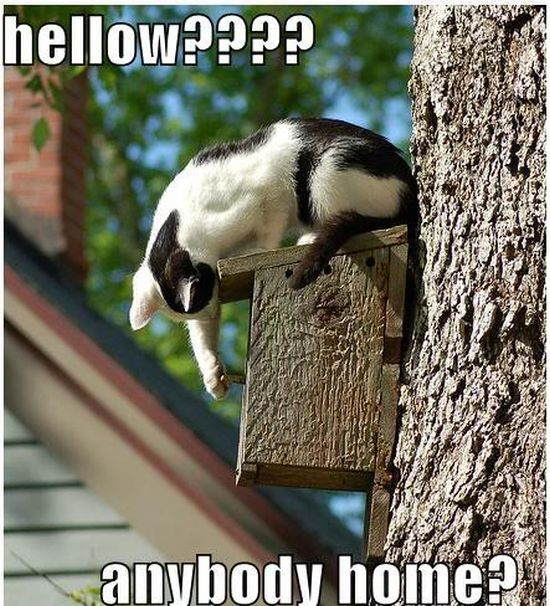 Hellow? - Cat humor