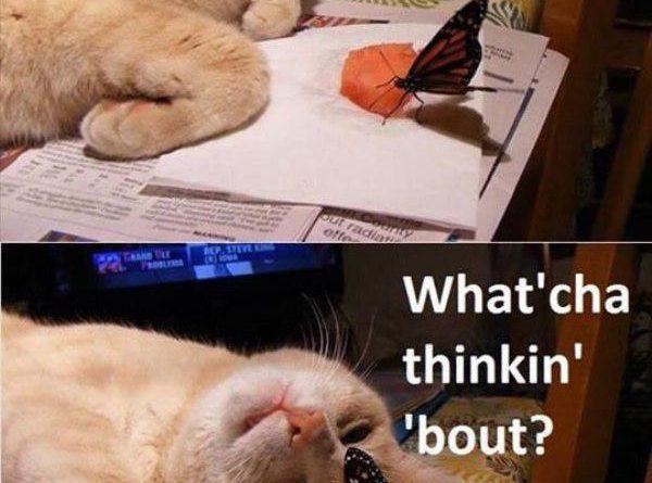 Hey Butterfly... - Cat humor
