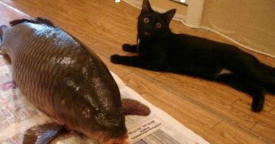 Holy Crap! - Cat humor