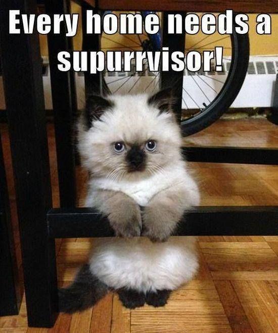 Home Supurrvisor - Cat humor