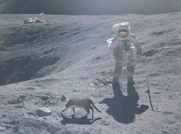 Houston, We Have A Problem - Cat humor