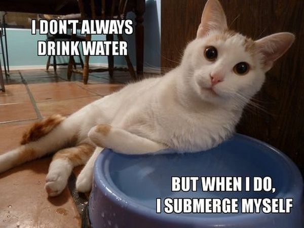 I Dont Always Drink Water But When I Do - Cat humor
