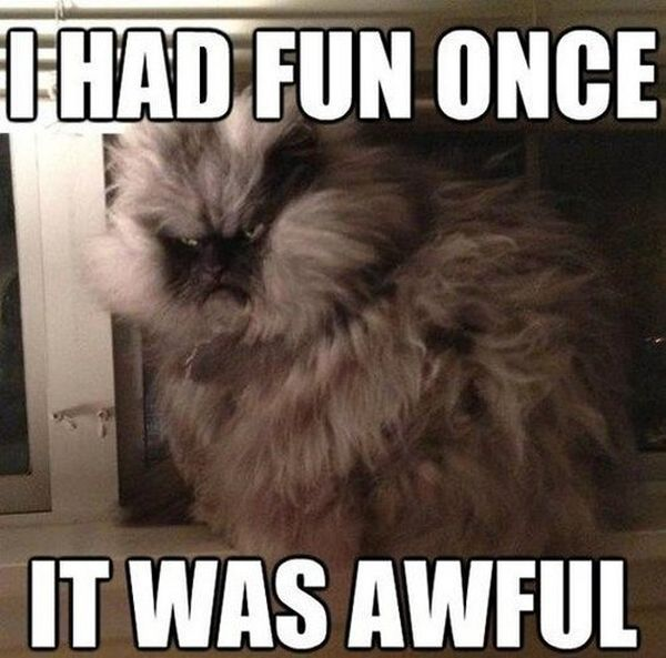 I Had Fun Once - Cat humor