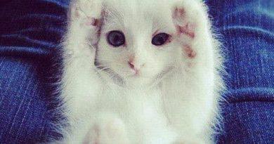 I Love You - Cat humor