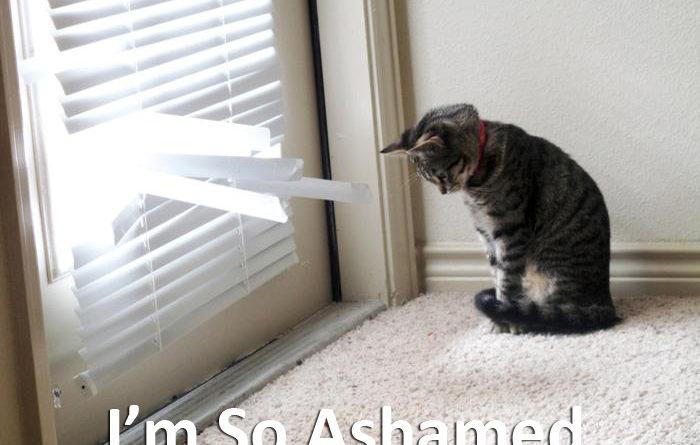 I'm So Ashamed - Cat humor