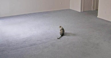 Invisible Everything - Cat humor