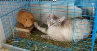 Just Checking - Cat humor