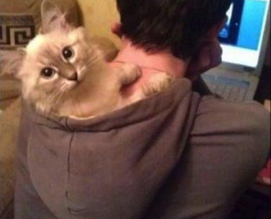 Living In Da Hood - Cat humor