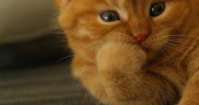 My Interest - Cat humor