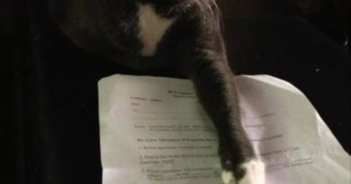 My Terms Are Simple - Cat humor