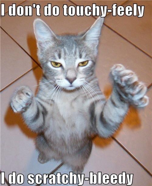 Ninja Cat - Cat humor