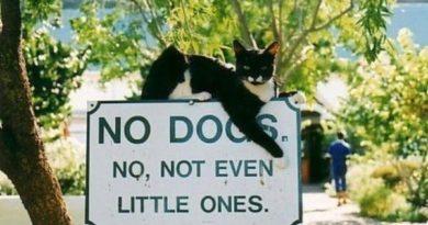 No Dogs - Cat humor