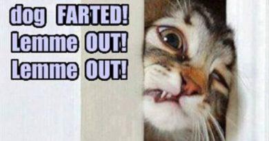 OMG! Dog Farted! - Cat humor